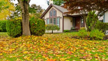 Fall Lawn Services